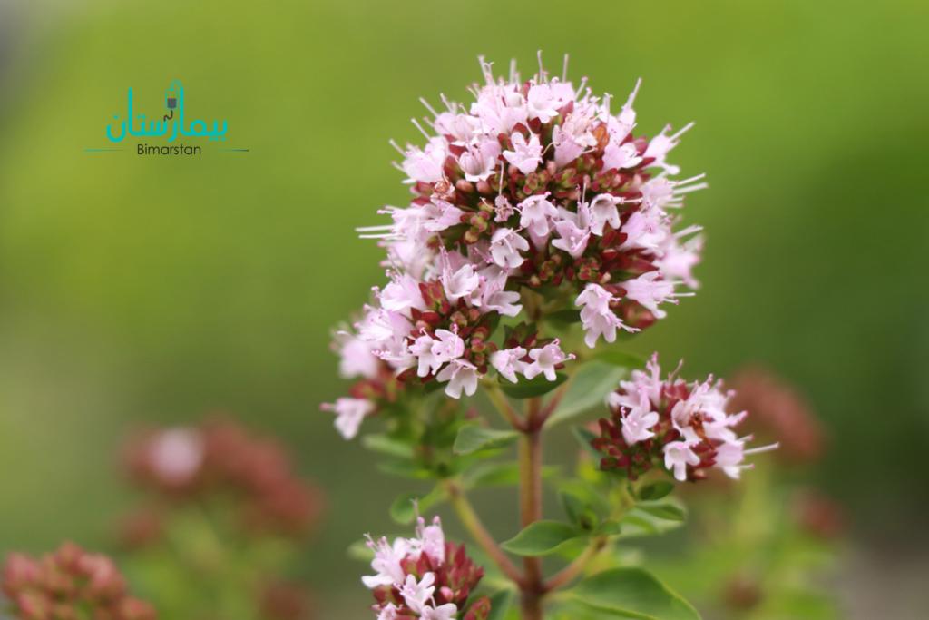 هل يمكن علاج تكيس المبايض بالاعشاب وبالطرق الطبيعية للابد؟